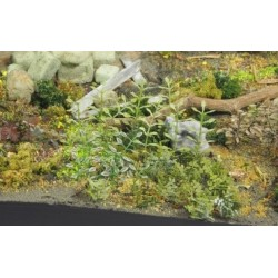 PLANTES EN PHOTODECOUPE - 1/35 - SET B