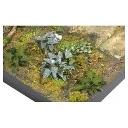 PLANTES PHOTODECOUPE - 1/35 - SET E